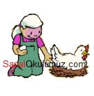 tavuk yumurta