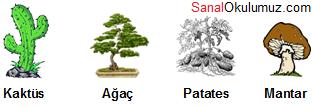 bitkiler kaktüs ağaç patates mantar