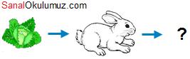soru 4 lahana tavşan