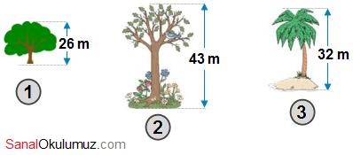 ağaç boyları yuvarlama