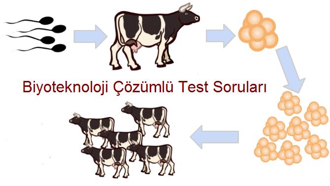 biyoteknoloji test soruları