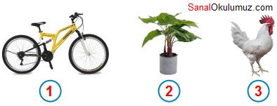 bisiklet bitki horoz