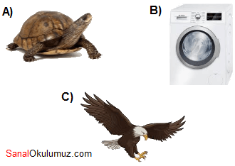 kaplumbağa çamaşır makinesi kartal