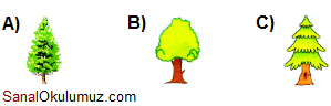 cevap 3